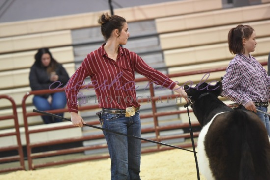 Youth Steer- Ring Shots